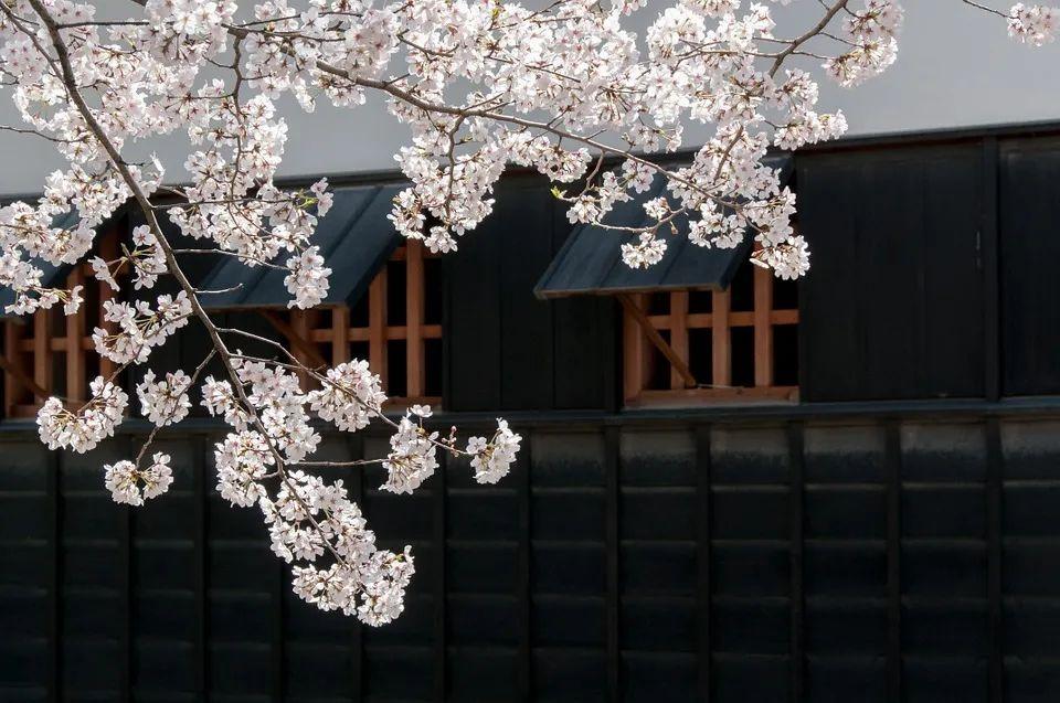 千代田留学丨疫情下日本留学热为何不降反升?附择校指南